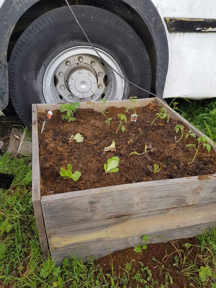Lettuces and tomatoes.