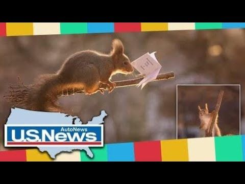 Breaking News - Squirrels play Harry Potter's favourite game: Quidditch