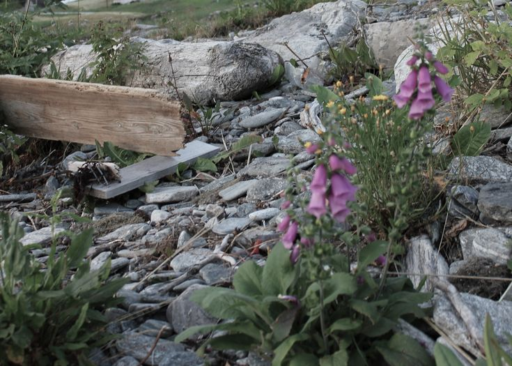 Flowers close the beach at Lote, Sogn of Fjordane county west in Norway.