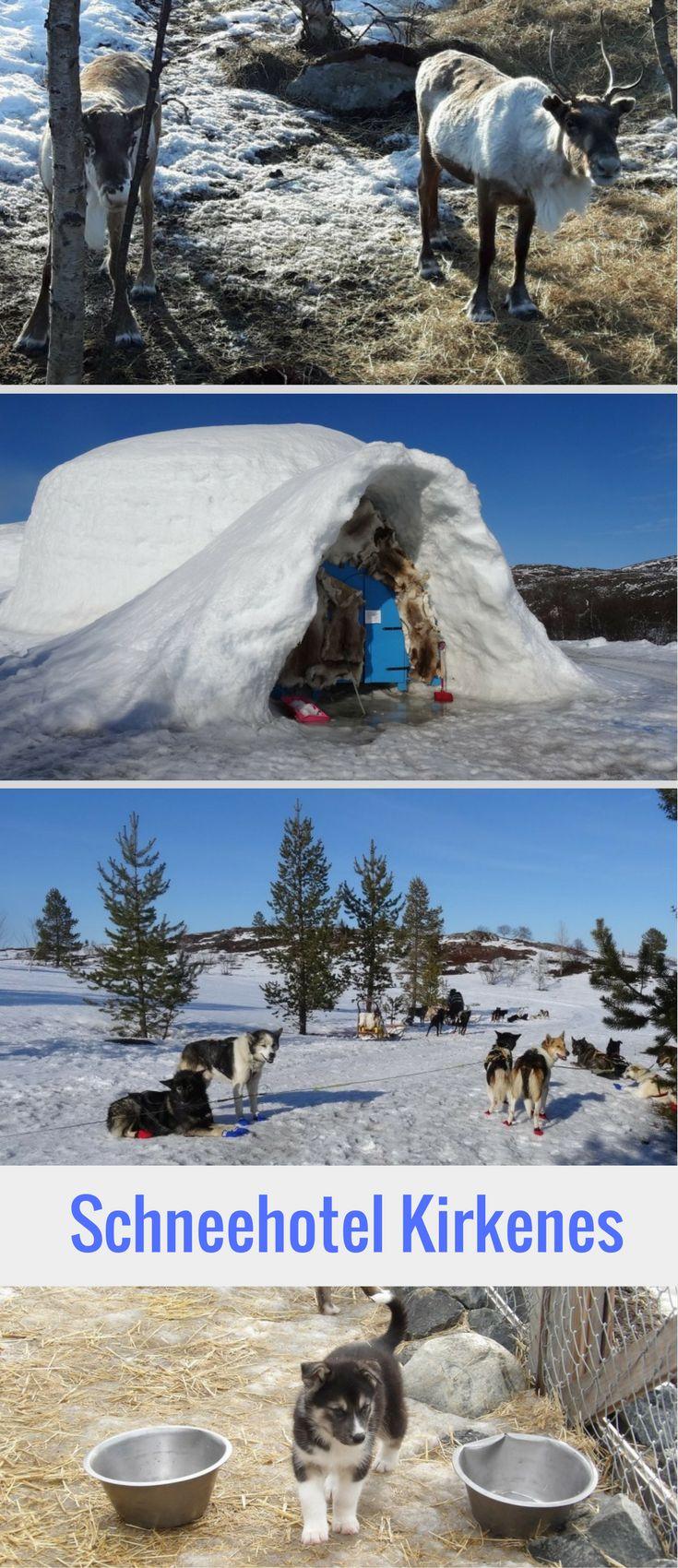 Das Schneehotel in Kirkenes im Norden von Norwegen hat so einiges zu bieten: Hundeschlittenfahren, Schneeschuhwandern und Schneemobiltouren. Dazu kannst du dir die knuffigen Rentiere oder Schlittenhund-Welpen ansehen. Das Hotel wird jeden Winter aus Schnee neu errichtet, samt Eisbar und Eisskulpturen.