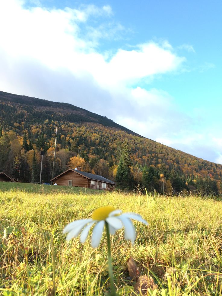 Flora and fauna abound at Mount Carleton Provincial Park. A keen botanist's eye will discover a number of rare plants, including Alpine blueberry and Bigelow's sedge. The rest of us will enjoy the beautiful wild flowers which blossom slopeside. #NBParks