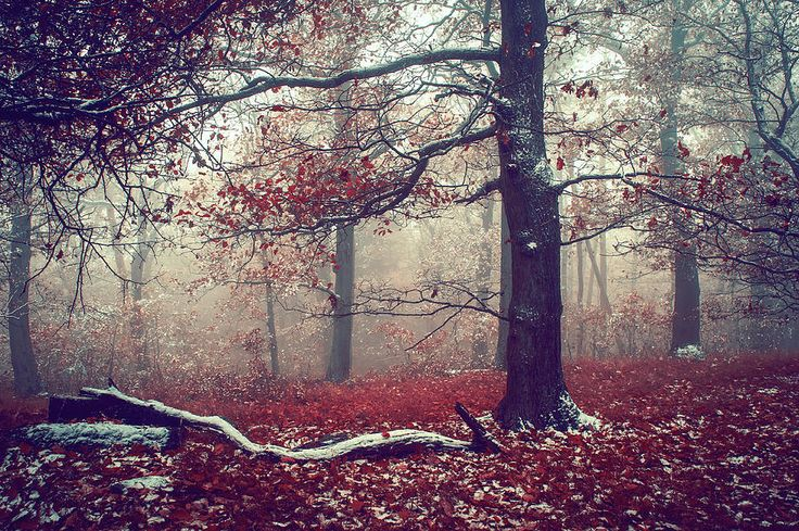 First Snow in Fall Woods by Jenny Rainbow.   Exquisite autumnal scene in misty woods in South Moravia, Czech Republic. #JennyRainbowFineArtPhotography #FineArtLandscapes #Woods #Winter #ArtForSale #HomeDecor