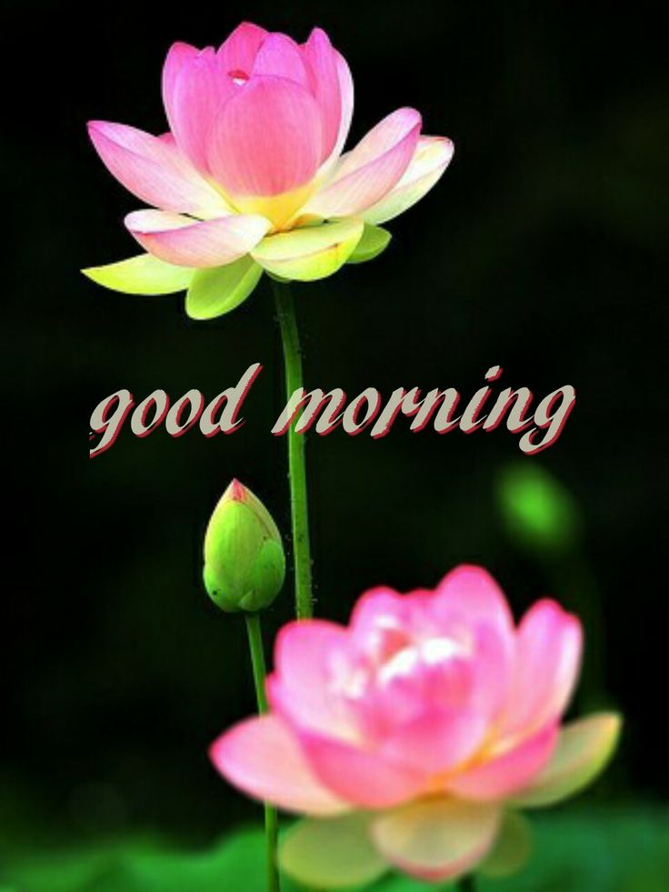 Good Morning Quotes Blessings: 777 Best Images About Good Morning On Pinterest