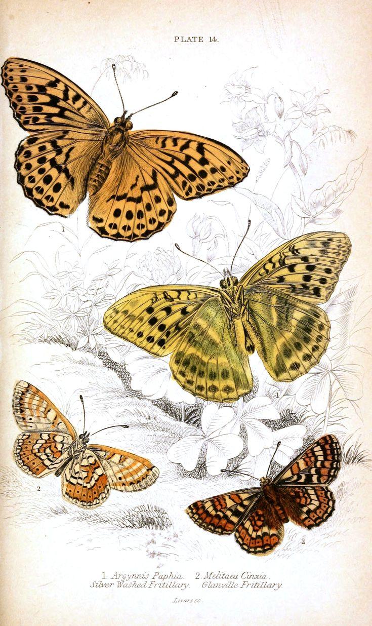 104 best pretty printables butterflies images on pinterest