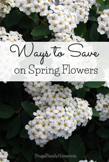 Here's a few ways to save on spring flowers. You don't have to spend a lot to have beautiful flowers in your garden.  http://www.frugalfamilyhome.com/home/gardening/spring-flowers-for-less  #springflowers #flowers