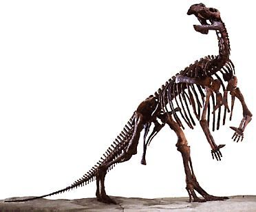 Named after the town of Muttaburra in central Queensland, Muttaburrasaurus langdoni was discovered by local grazier Doug Langdon, for whom the dinosaur is named.