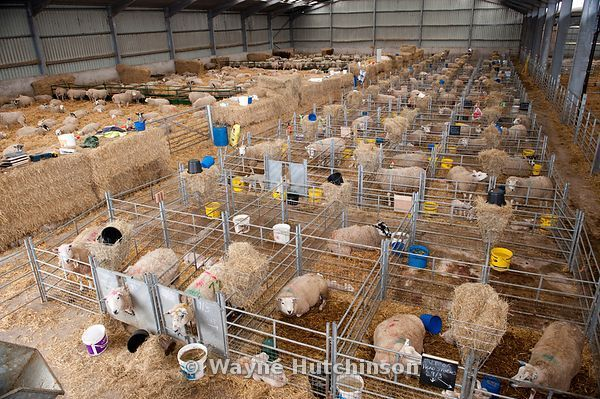 Lambing shed                                                                                                                                                                                 More