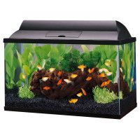 101 best images about fish tanks on pinterest aquarium for How do you clean a fish tank