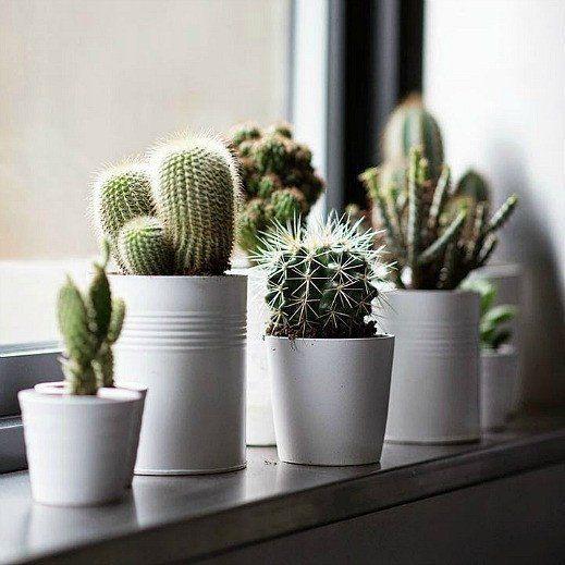 Cactus Gift Collection - Windowsill Garden Seeds