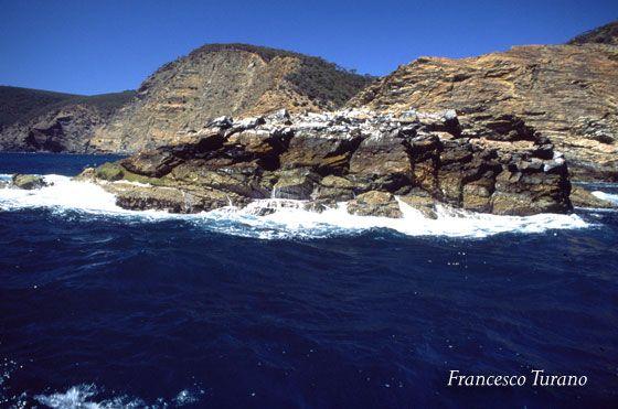 I draghi di mare sull'isola dei canguri Immersioni in Australia