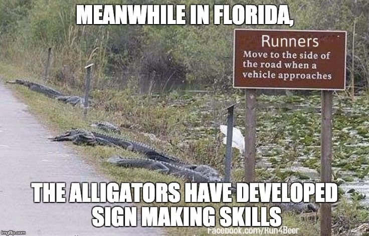 MEANWHILE IN FLORIDA, THE ALLIGATORS HAVE DEVELOPED SIGN MAKING SKILLS | made w/ Imgflip meme maker