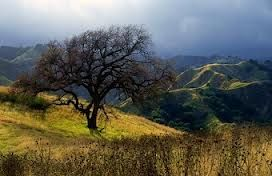 Oak Tree In Towsley Canyon, Santa Clarita, California