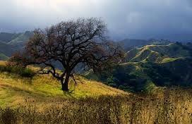 Oak Tree In Towsley Canyon, Santa Clarita, California