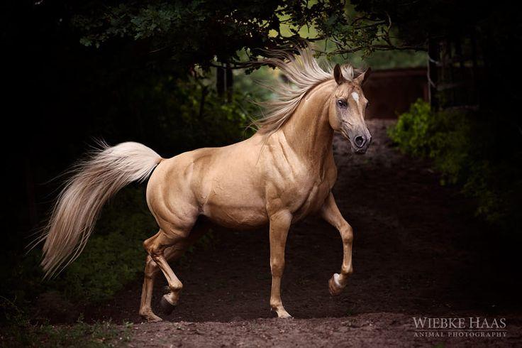 Arabian Gold by Wiebke Haas on 500px