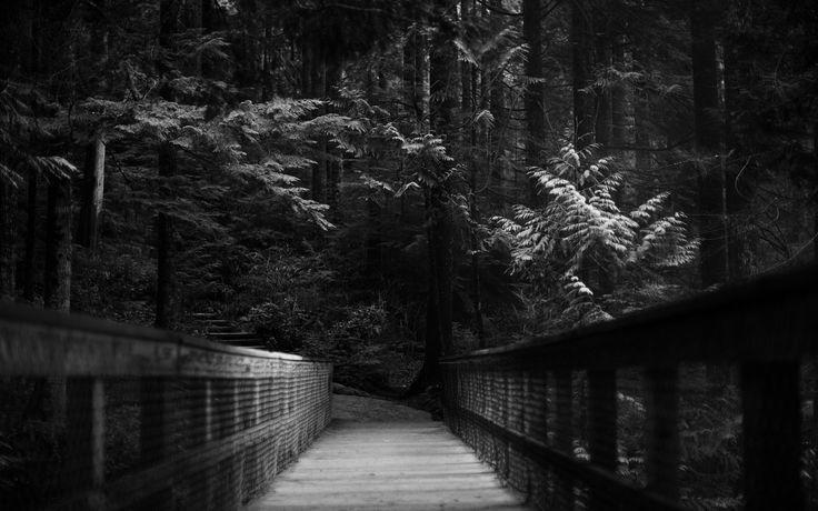 Árboles bosque oscuro fondo de pantalla monocroma ruta