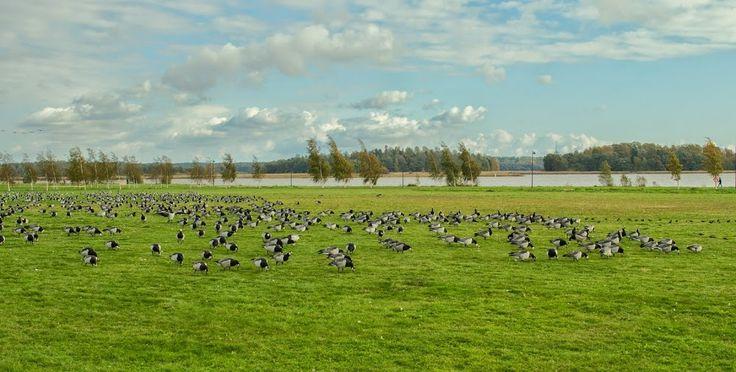 Life in Finland: ARABIANRANTA