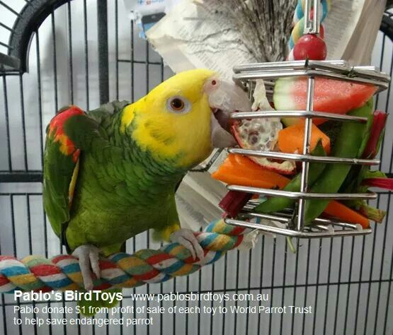 Bird Enrichment Toys : Images about aviary on pinterest