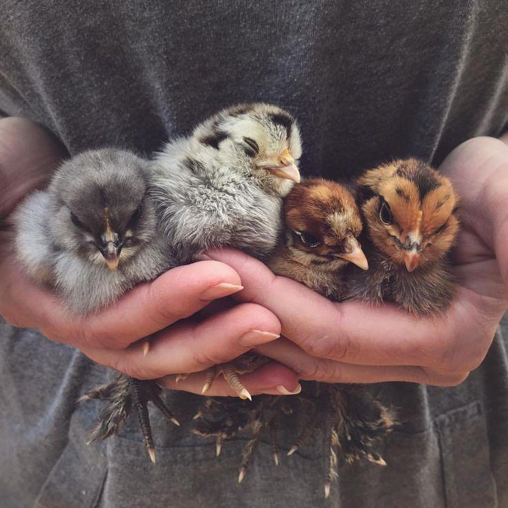 "1,781 Likes, 39 Comments - Farm + Bakery (@threelittleblackbirds) on Instagram: ""Handfuls of soft sweetness """