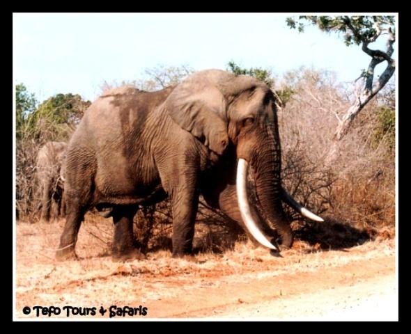 Enjoy #krugerpark with us. Book your safari now www.tefotours.com