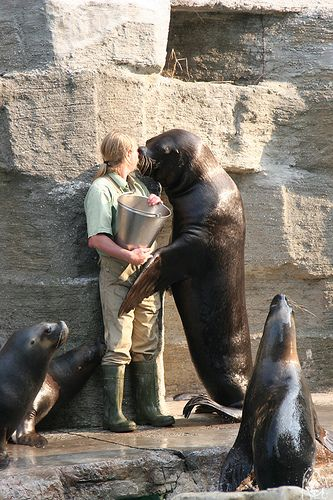ZooKeepers. Difference between zookeeper and 'person who works with animals'.