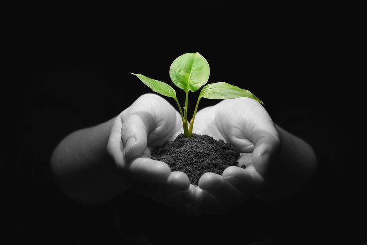 Seeds of Creativity Grow into Amazing Achievements