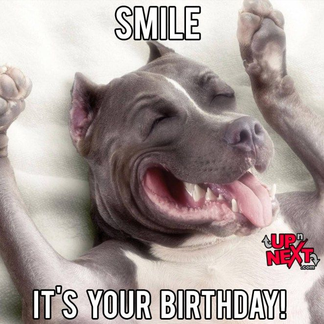 30 Funny Happy Birthday Memes Cake Candles Cat Dog Amp Many Happy Birthday Meme Happy