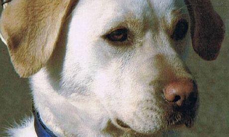 Sasha, un chien héros décoré 6 ans après sa mort