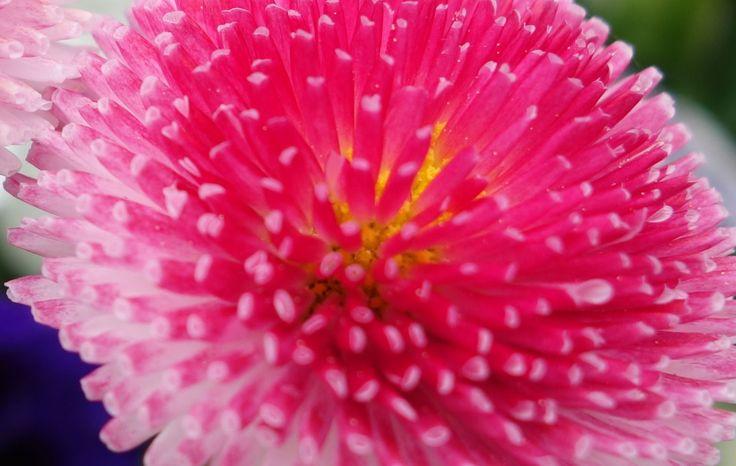 10 best blumen im mai images on pinterest flowers. Black Bedroom Furniture Sets. Home Design Ideas