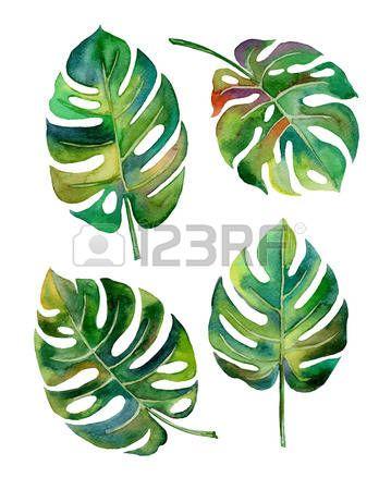 aquarelle: main dessiner conception de style de la feuille de Split pour l'étiquette, papier covertexture illustration EPS10 Illustration
