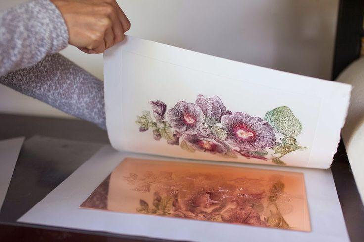 Althaea Rosea var. nigra #BlackMallow #AdamPoltorak #HERBARIUM #copperplate