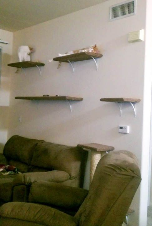 Charming 241 Best Cat Shelves, Condos, Trees U0026 Perches Images On Pinterest | Cat  Shelves, Cat Stuff And Cats