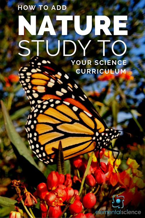 Where does nature study fit into your homeschool science curriculum? Is it the centerpiece or just an afterthought? Click on to learn how to add nature study to your homeschool science plans!