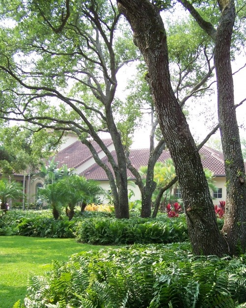 The perfect central florida yard landscaping and for Garden law trees