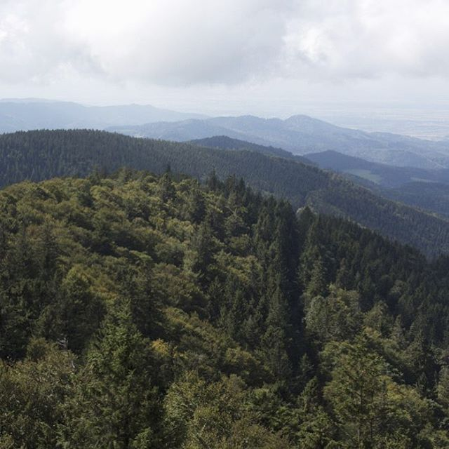 A breathtaking view over the Black Forest in Germany, where we source most of our wood from. All our suppliers practice sustainable forestry, and we source only the best raw wood, which we treat with care and respect - you can therefore enjoy your Dinesen floors with a clear conscience. The forest is still standing.