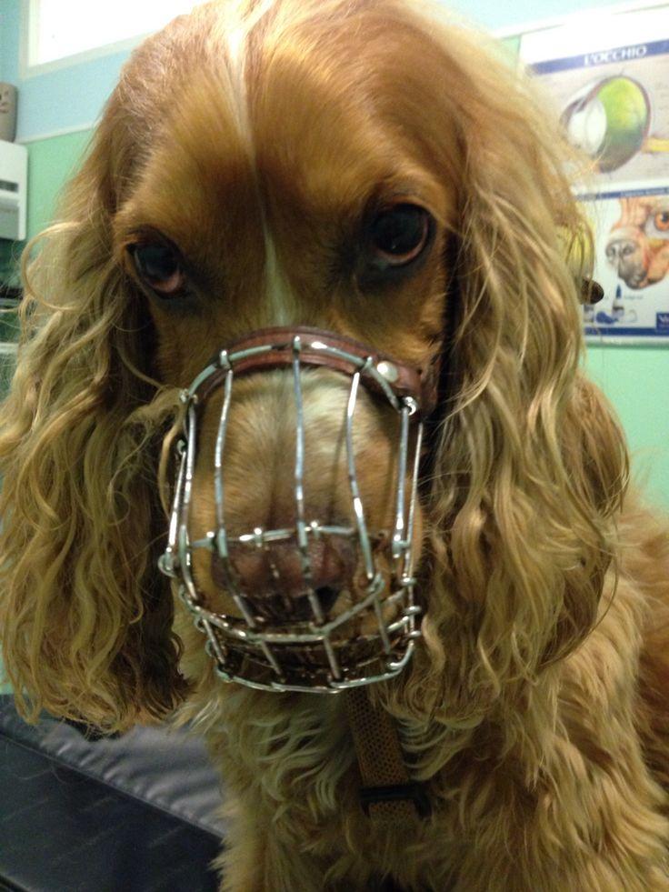 Zeus dal veterinario!!!!
