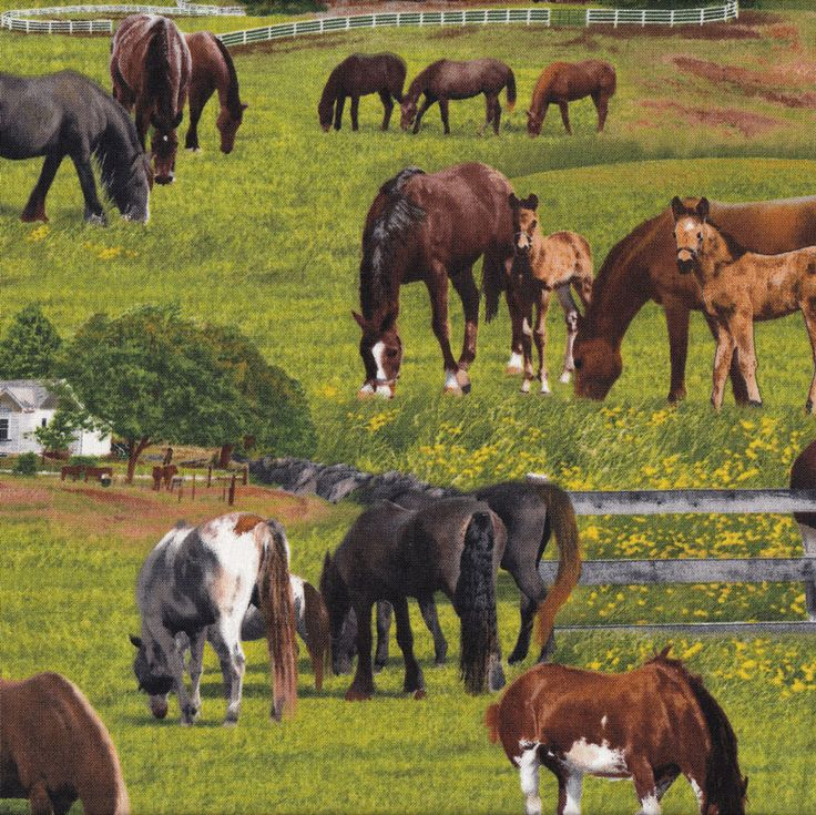 Horses on Grass Farm Animal Country Barn Fence Quilting Fabric - Find a Fabric Available to purchase in Fat Quarters, Half Metre, 3/4 Metre, 1 Metre and so on.