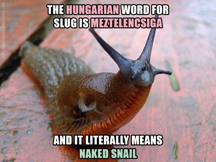 meztelencsiga [ˈmɛztɛlɛntʃˈiɡɑ] – slug [Literally::: dressless/naked snail] https://dailymagyar.wordpress.com/2016/08/26/meztelencsiga/ #Hungarian #language #funny #words #meme