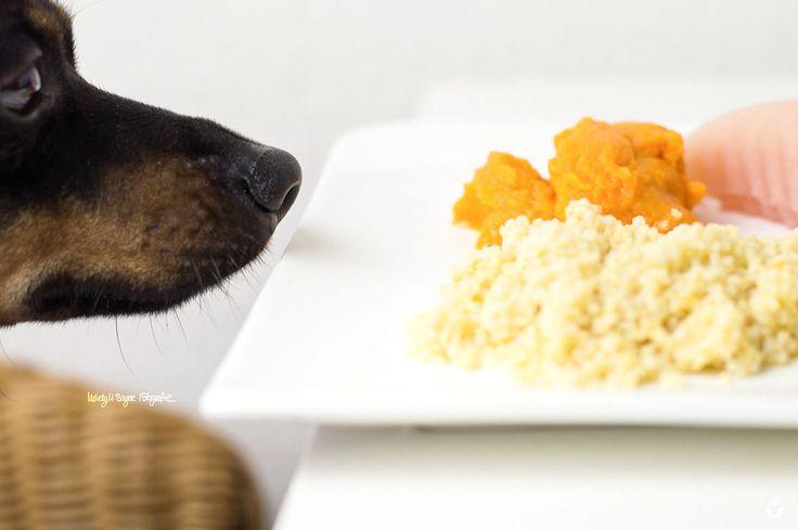 [BAUCHWEHKOST]  #schonkost für #hunde © Melody M. Bayer Fotografie | BUDDY&ME #PinscherBuddy