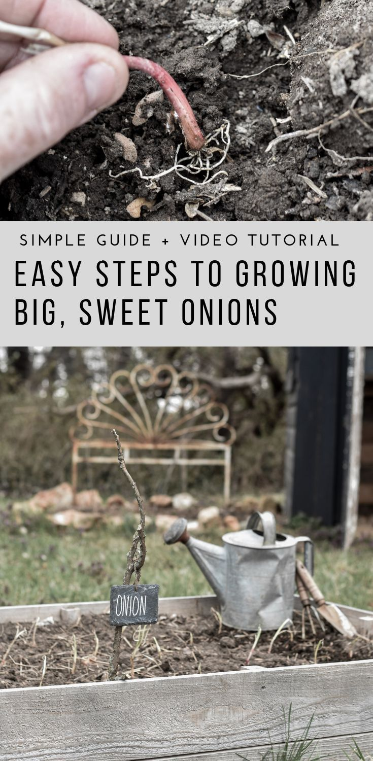 How To Plant And Grow Onions With Images Planting Onions Easy