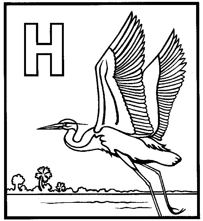 Heron Bird Coloring Pages 9 best images about science Animals Great Blue Herons
