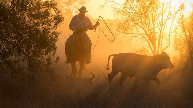 Coonamble, 2829: Bill Little is hazy about the date he set out to lead the biggest cattle drive in Australia's living memory. See more at The Australian.