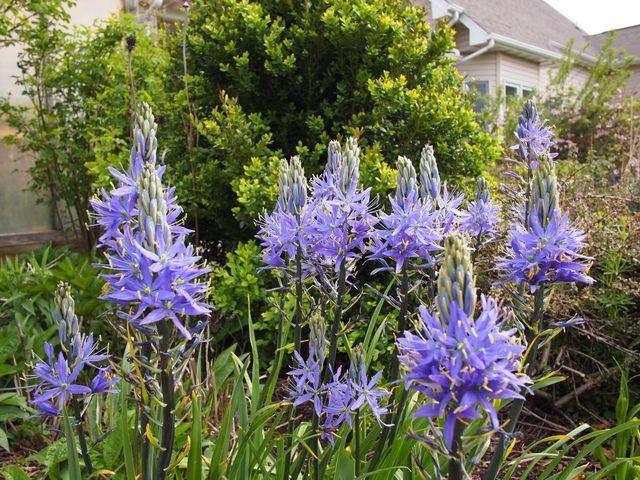 25 best ideas about terre argileuse on pinterest taille - Quels outils pour jardiner ...