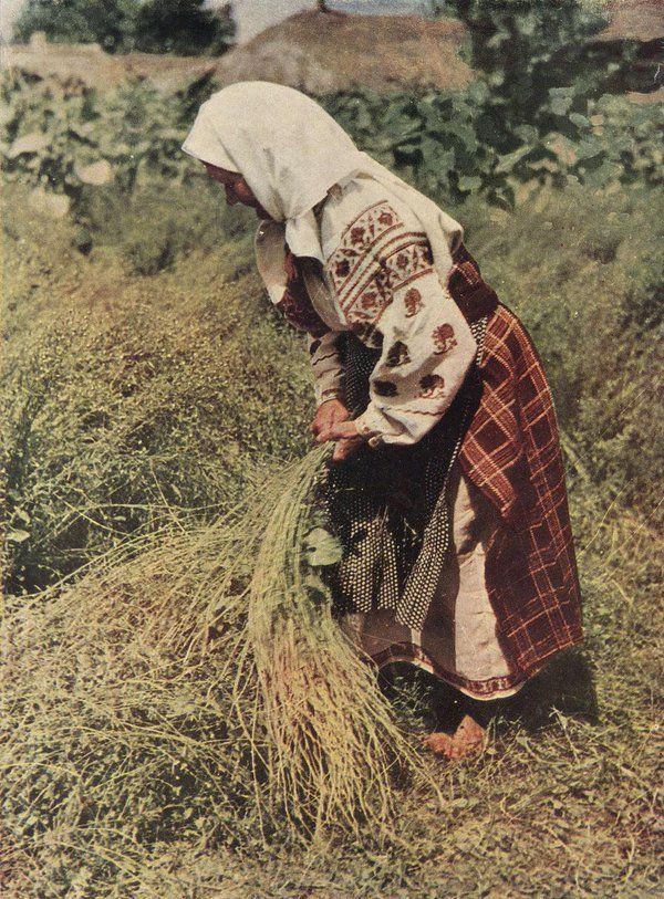 Старенька жінка у вишиванці та плахті. Село Перелюб на Чернігівщині, 1950-і рр.