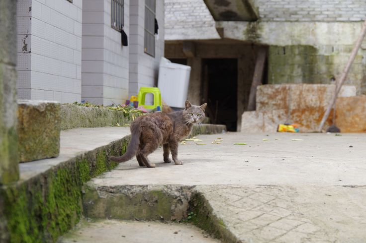 Stray cat in China, surrounded by concrete   https://www.facebook.com/ACTAsiaForAnimals https://twitter.com/Tweet_ACTAsia https://www.youtube.com/user/ACTAsia1 http://www.oninstagram.com/profile/actasia https://www.linkedin.com/company/actasia-for-animals http://actasia.tumblr.com/ https://issuu.com/actasia