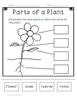 Parts Of A Plant Cut And Paste Activity Planning Your