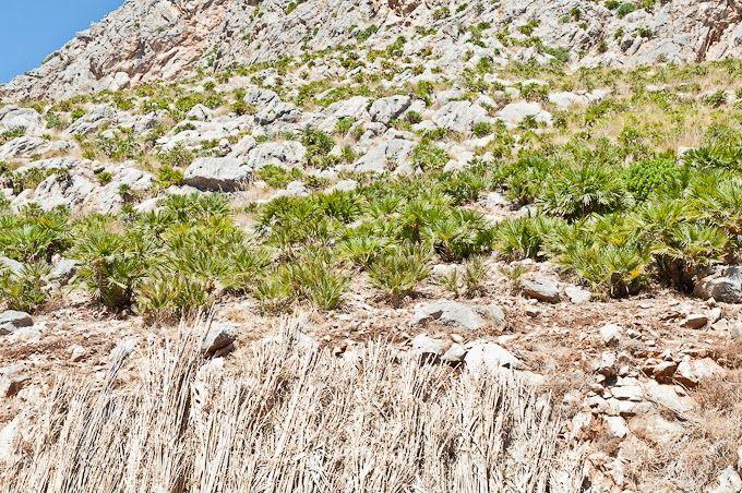 Sicily - Riserva Naturale dello Zingaro