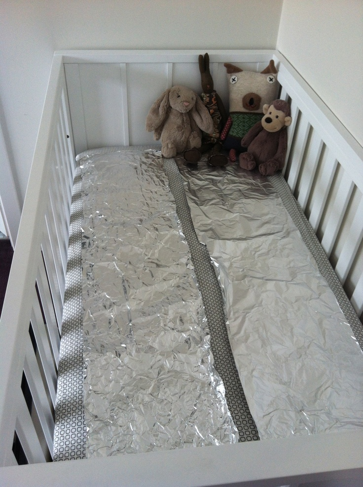 So why have I covered my new baby's cot in aluminium foil? Post if think you know the answer and let me know you perfect pet and parenting tips. I'll post a top ten in my next pet blog.