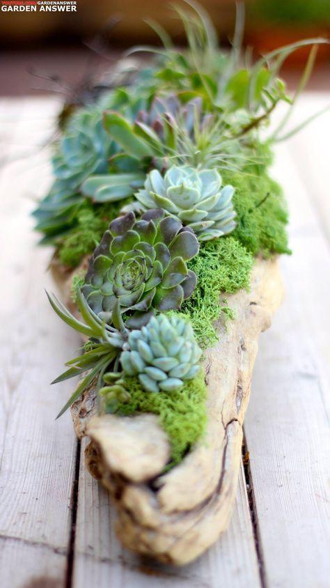 Succulents, air plants, moss, and driftwood. Love it! www.youtube.com/gardenanswer www.facebook.com/gardenanswer