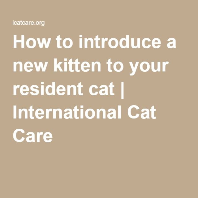 How to introduce a new kitten to your resident cat   International Cat Care