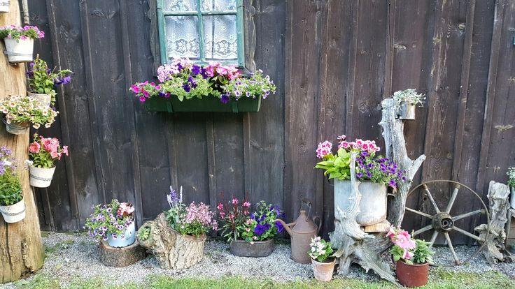 Hier hab ich die Farben Lila und Rosa mit Surfinien, Pelargonien, Salvien, Begonien,... bevorzugt. Ende Mai 2017